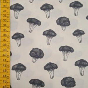 Broccoli 12.09.0159